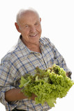 senior man holding lettuce, cut out