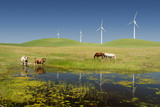 Power Generating Windmills and Livestock poster