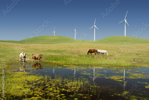 Power Generating Windmills and Livestock