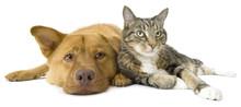 """Постер, картина, фотообои """"Dog and Cat together wide angle"""""""