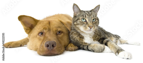 Dog and Cat together wide angle - 14222510