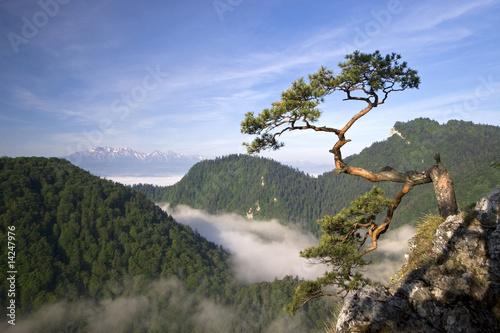 Sokolica Peak in Pieniny, Poland - 14247976