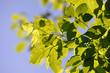 Grüne Blätter und Himmel