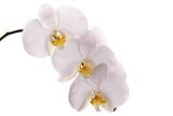 Fototapety Orchideen Blüten