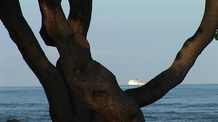 Ocean freighter through a tree branch, Big Island, Hawaii