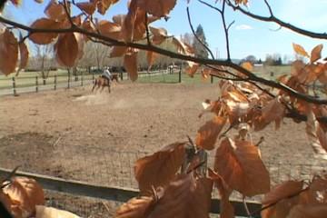 Woman Rides Horse on Farm