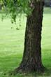 Einsames Baum