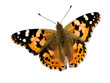 Colorful butterfly isolated on white with clipping paths