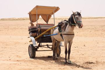 horse in desert