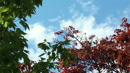 sky and trees.