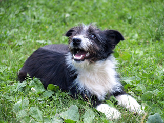 funny puppy on the meadow