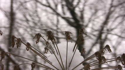 Sticks and branches winter wood, panning