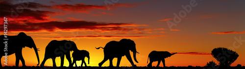 Aluminium Olifant Walking elephants