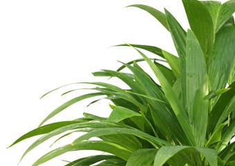 un coin de palmiers
