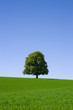Baum, Wiese, Himmel