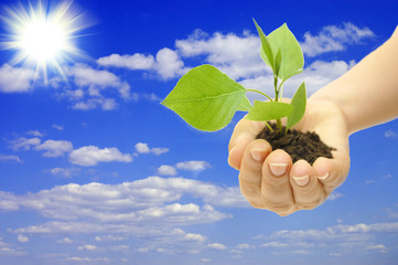 plant in hand on blue sky background with white clouds