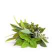 Mixed Herb Leaves