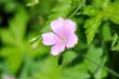 Wilde Blumen auf der Wiese