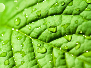 Green leaf texture with water drops on it