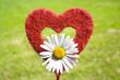 Bastherz mit Margeritenblüte