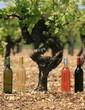 vin,vignoble,rouge,blanc,rosé,liquoreux,vigne,vigneron,bordeaux
