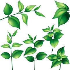 Set of different branches with green leaves