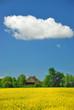 Rapsblüte mit Wolke 193