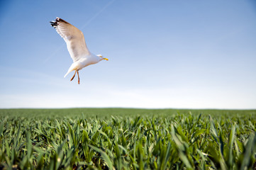 Bird flying over green grass