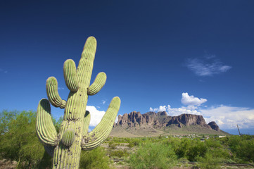 a green cactus against a blue sky