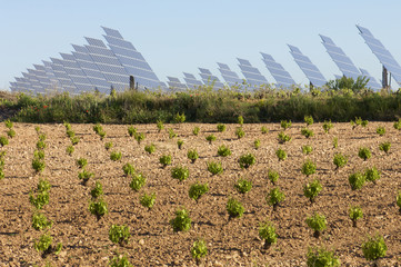 vineyard and solar panels