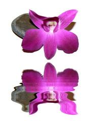 Orchidée et son reflet