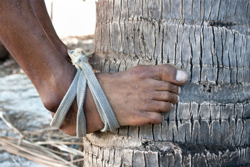 Foot of strong deft man who  are climbing on coconut tree