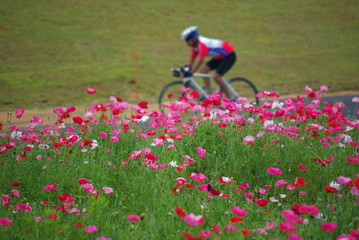 自転車とポピー