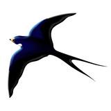 Rondine-Swallow-Hirondelle-Cartoon poster