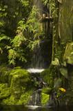 Fototapety green lagoon
