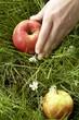 Apfel aufnahme