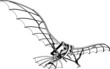 Flying Machine Leonardo da Vinci Antique Hang Glider Vector 01 - 14398968