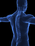 Human Spine x ray closeup poster