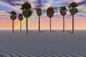 Smooth Sand and Palms
