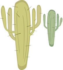 Two cactuses with spikes