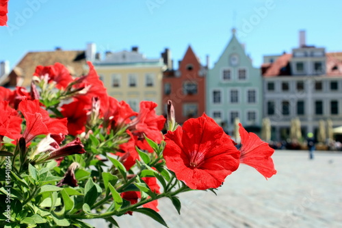 red flowers and the main town square