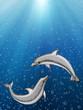 Fototapete Ozean - Säugetier - Unterwasserlandschaft