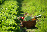 panier de légumes dans un potager
