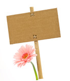 nature message series - advertisement and flower in summer poster