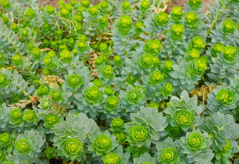 green flowering plants