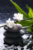 Black massage stones with cherry ,petal on water drops - 14431162