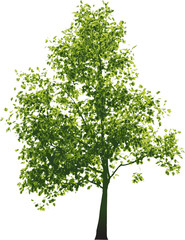 Vector green tree..