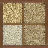 four rice grains in a box with dividers poster