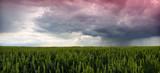 storm panorama poster