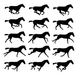 Galop : séquence (x15) - Gallop : sequence (x15)
